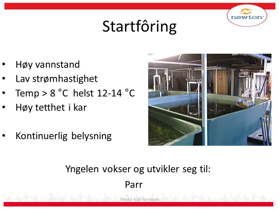 Startfôring Høy vannstand Lav strømhastighet