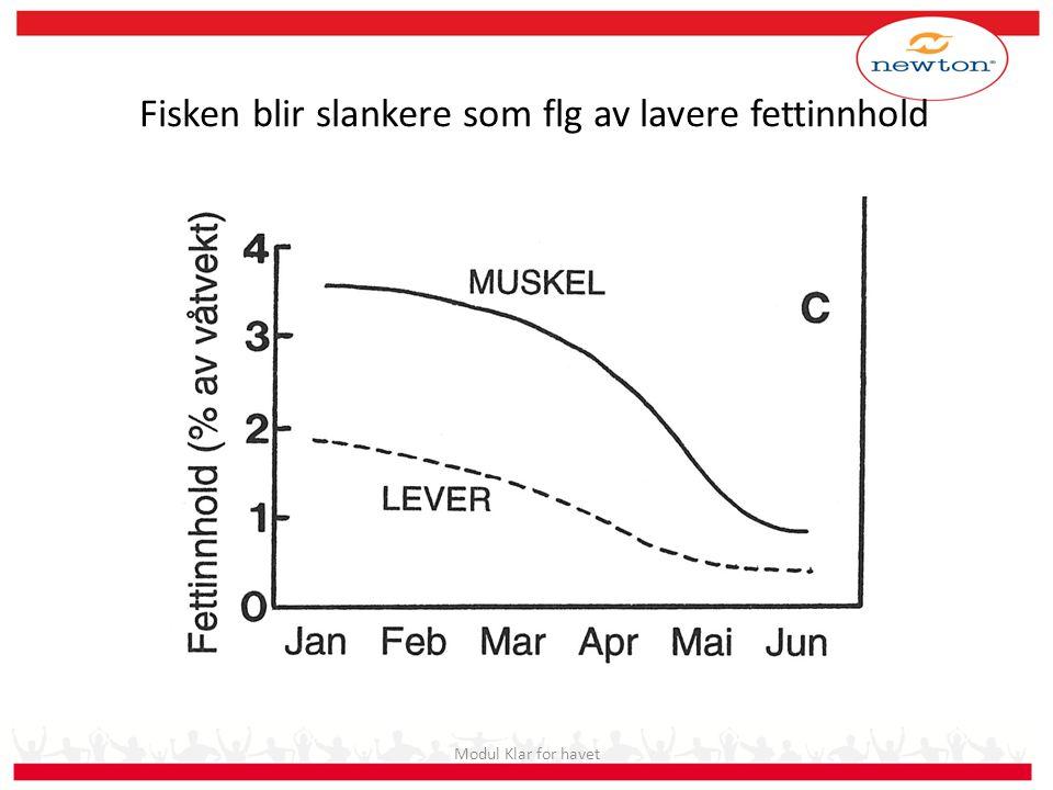 Fisken blir slankere som flg av lavere fettinnhold