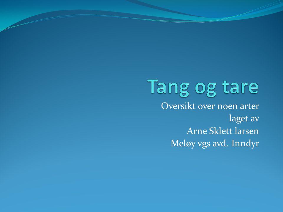 Tang og tare Oversikt over noen arter laget av Arne Sklett larsen