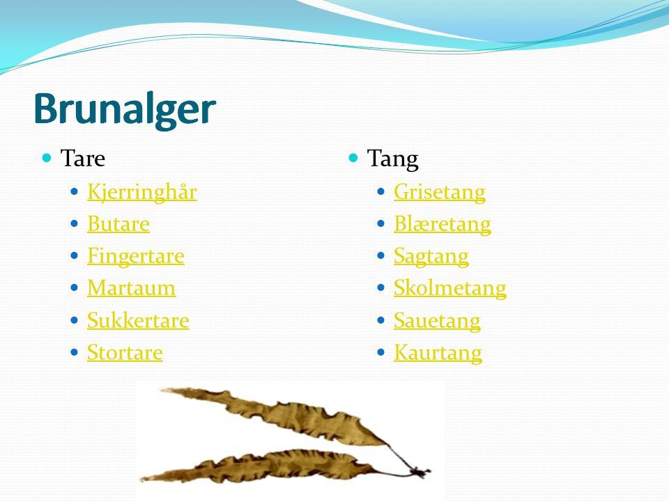 Brunalger Brunalger Tare Tang Kjerringhår Butare Fingertare Martaum