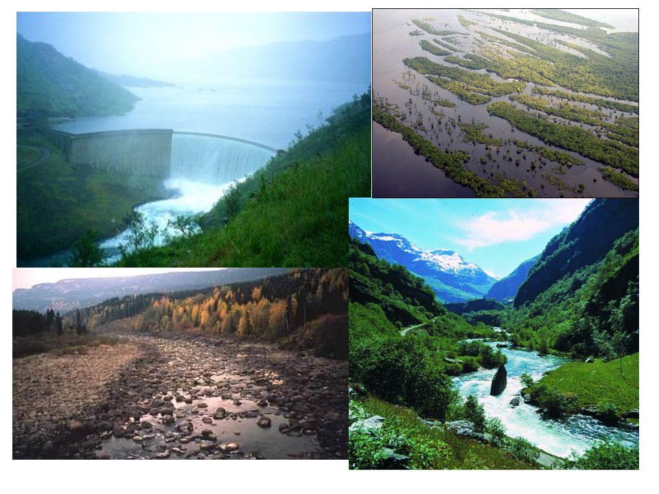Positive argumenter: «fornybar energi, ingen forurensning, Norge har mye tilgjengelig vannkraft»
