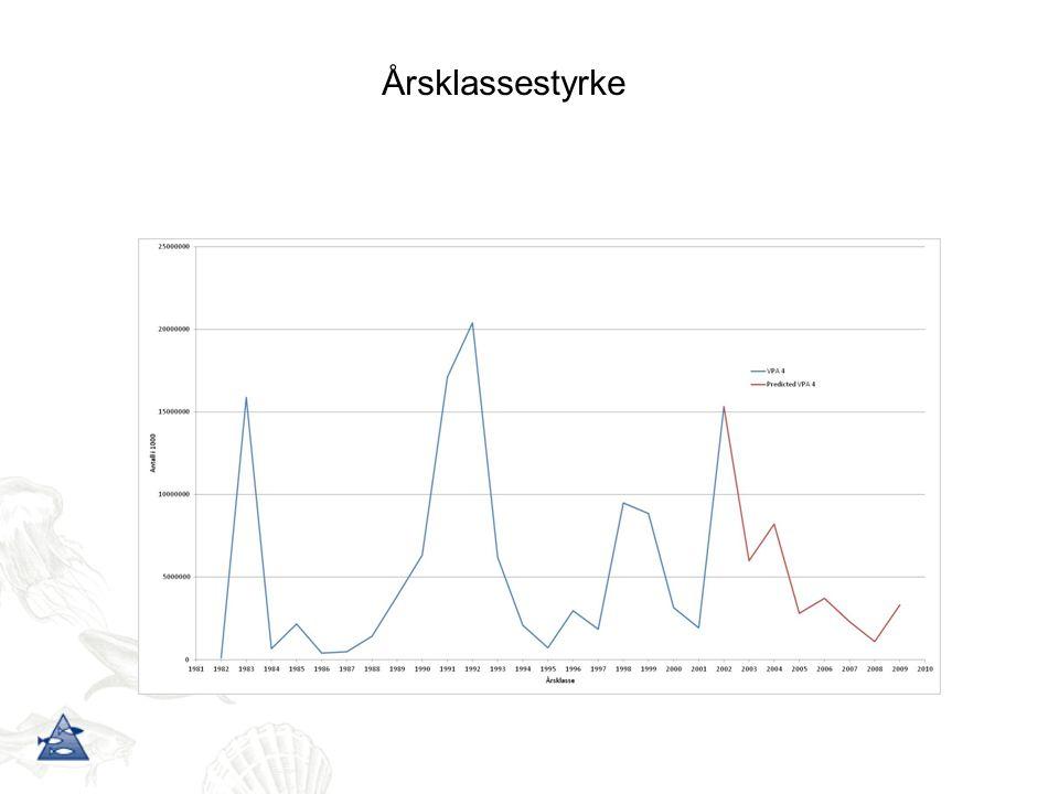 Årsklassestyrke Viser hva maitoktet foreller oss om rekrutteringen (den røde delen av kurven)