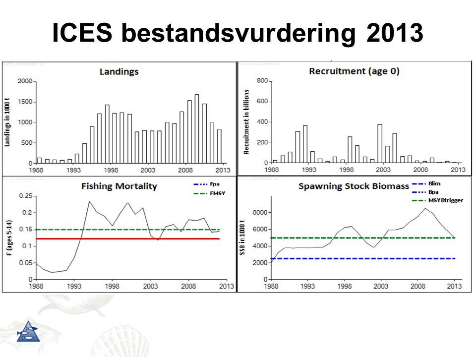 ICES bestandsvurdering 2013