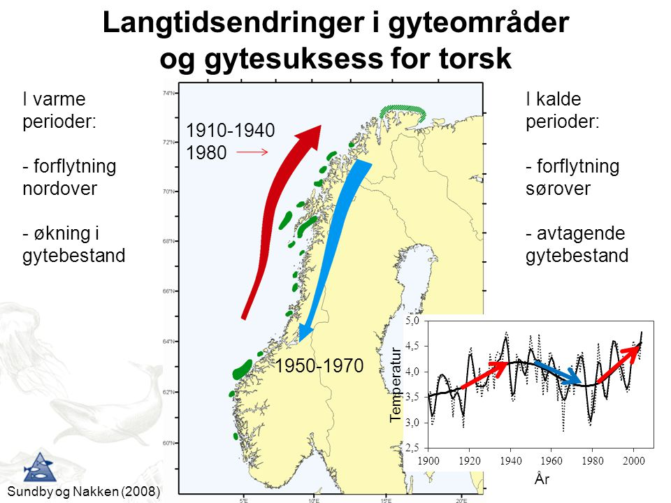 Langtidsendringer i gyteområder og gytesuksess for torsk
