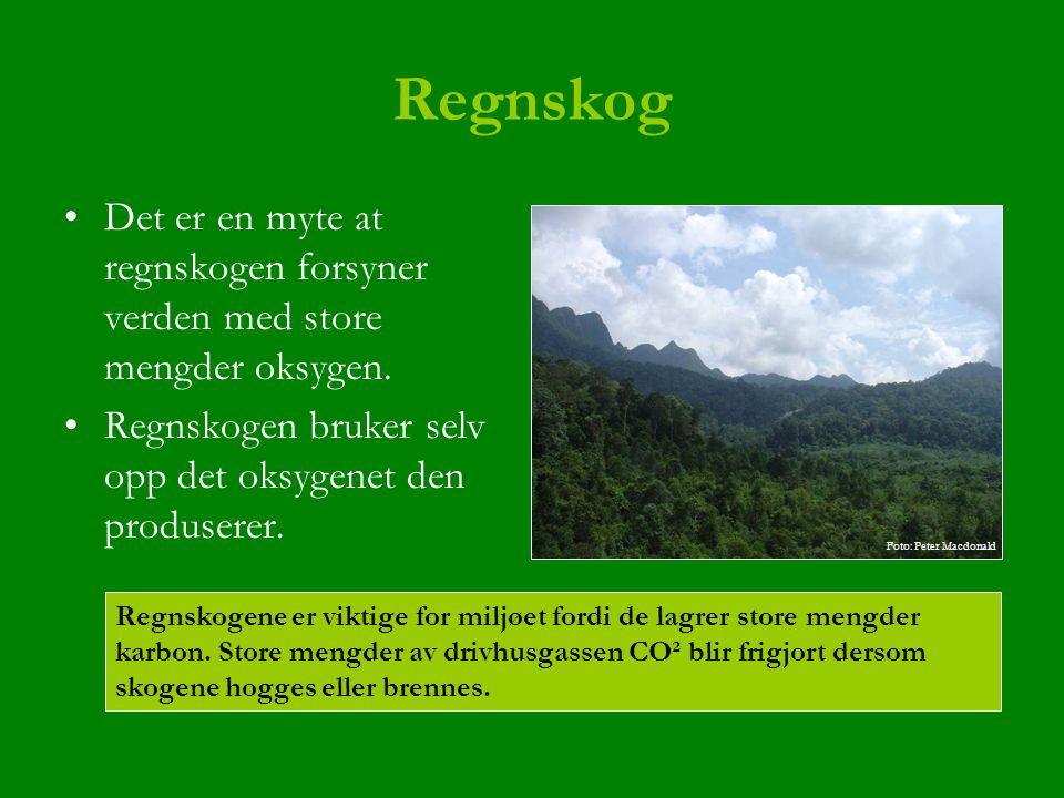 Regnskog Det er en myte at regnskogen forsyner verden med store mengder oksygen. Regnskogen bruker selv opp det oksygenet den produserer.