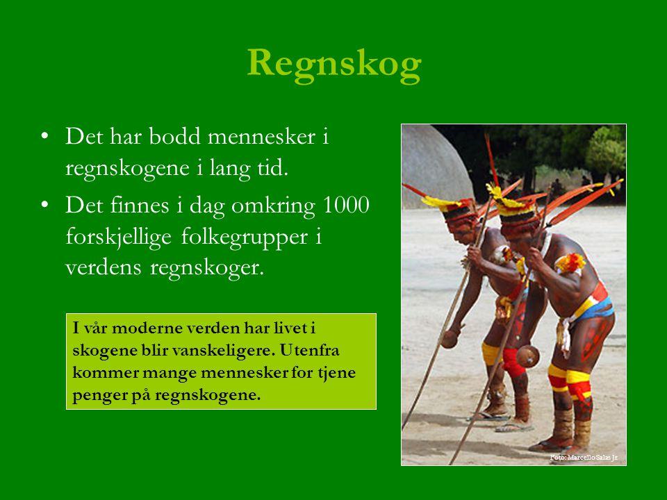 Regnskog Det har bodd mennesker i regnskogene i lang tid.