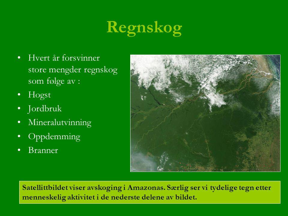 Regnskog Hvert år forsvinner store mengder regnskog som følge av :