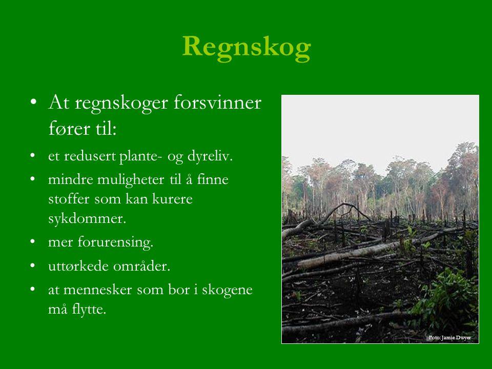 Regnskog At regnskoger forsvinner fører til: