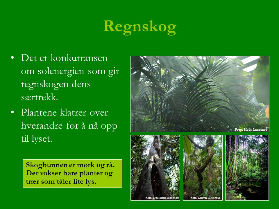 Regnskog Det er konkurransen om solenergien som gir regnskogen dens særtrekk. Plantene klatrer over hverandre for å nå opp til lyset.