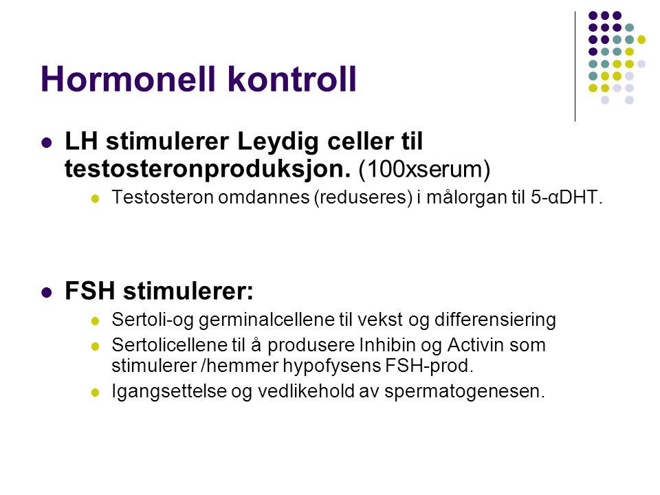 Hormonell kontroll LH stimulerer Leydig celler til testosteronproduksjon. (100xserum) Testosteron omdannes (reduseres) i målorgan til 5-αDHT.