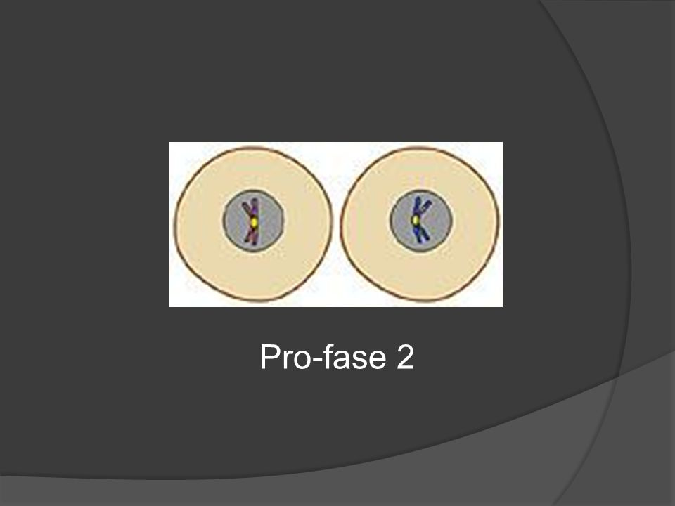 Pro-fase 2