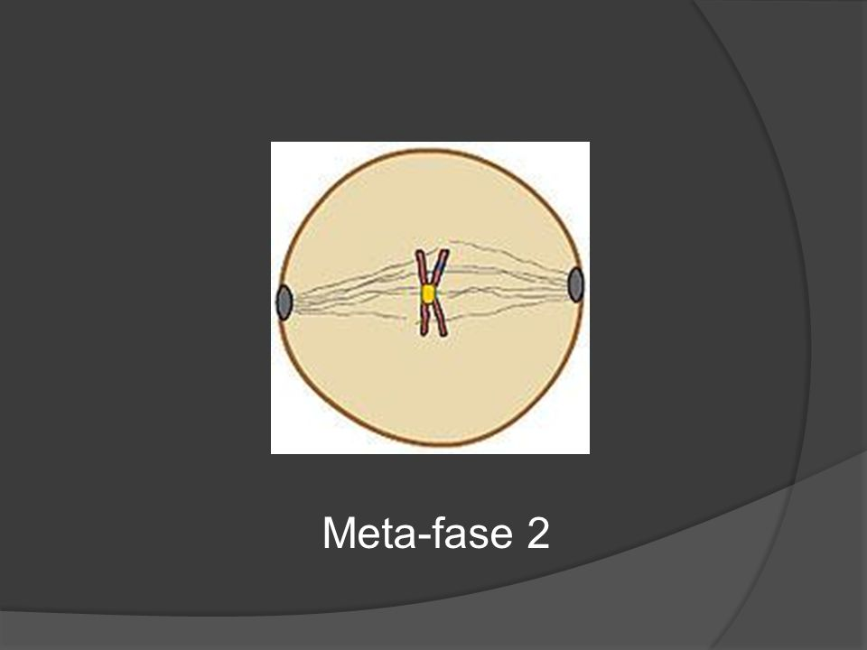 Meta-fase 2