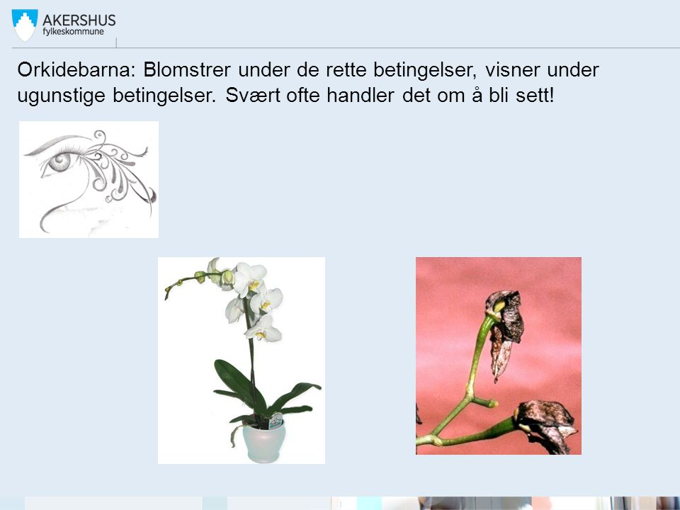 Orkidebarna: Blomstrer under de rette betingelser, visner under ugunstige betingelser.