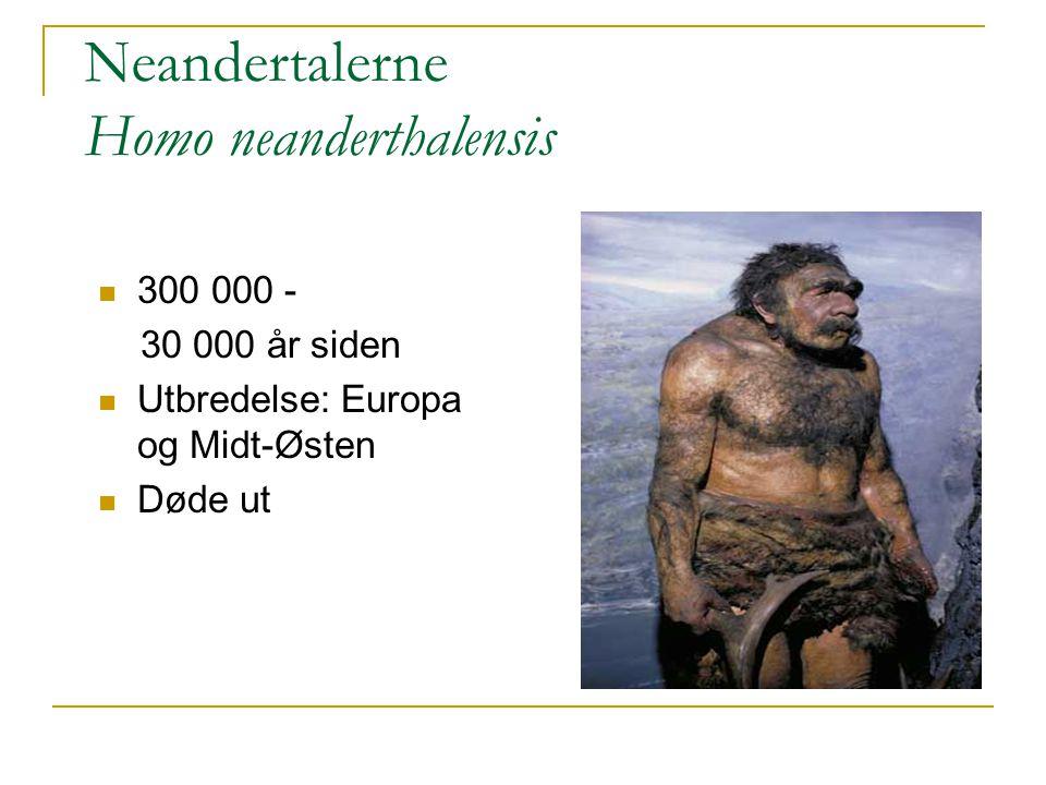 Neandertalerne Homo neanderthalensis