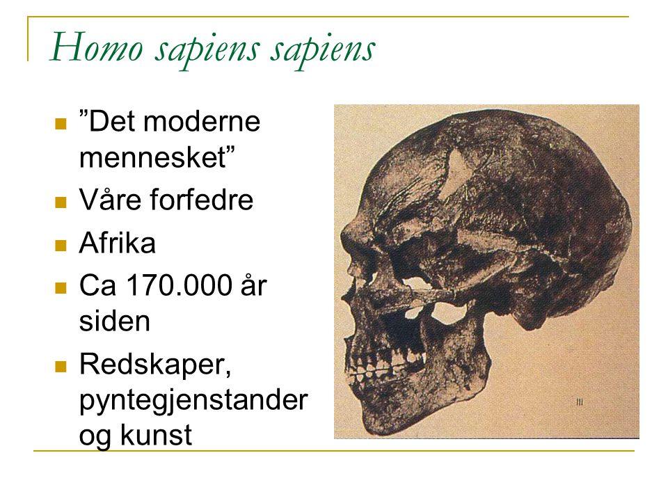 Homo sapiens sapiens Det moderne mennesket Våre forfedre Afrika