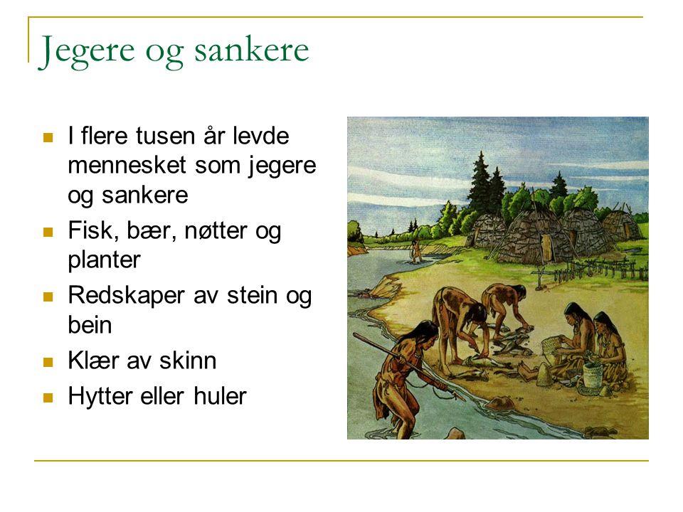 Jegere og sankere I flere tusen år levde mennesket som jegere og sankere. Fisk, bær, nøtter og planter.