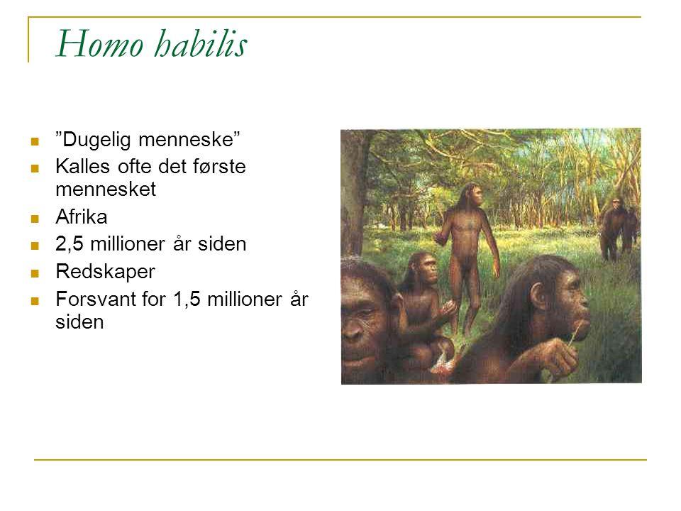 Homo habilis Dugelig menneske Kalles ofte det første mennesket