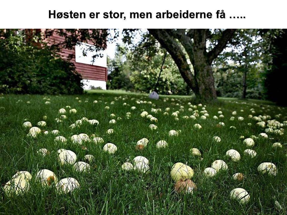 Høsten er stor, men arbeiderne få …..