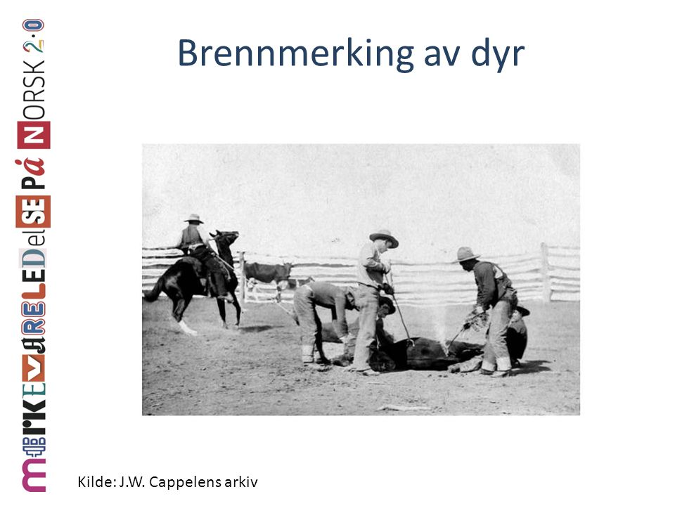Brennmerking av dyr Kilde: J.W. Cappelens arkiv