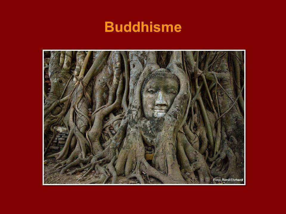 Buddhisme Bilde: Buddha-hode blant røtter i Thailand.