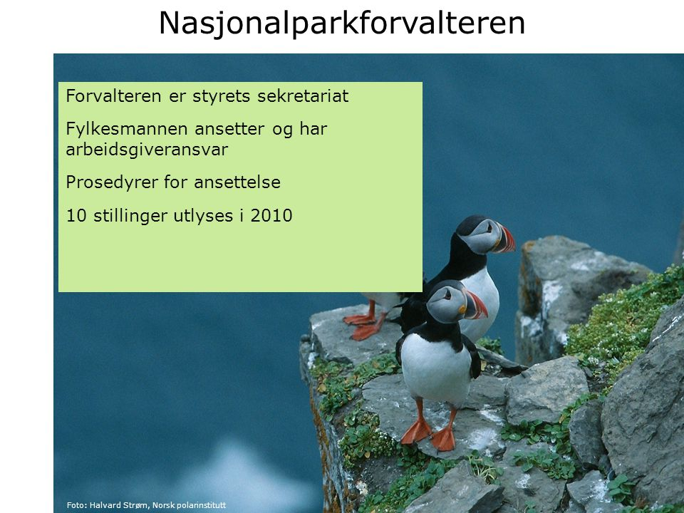 Nasjonalparkforvalteren