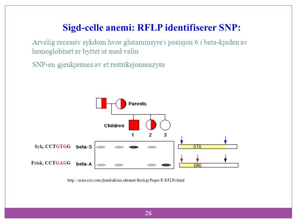 Sigd-celle anemi: RFLP identifiserer SNP: