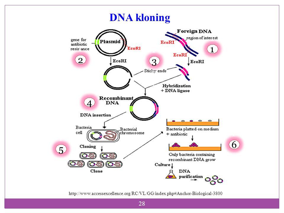 DNA kloning 111yy 112yy 113yy 4 116yy 115yy