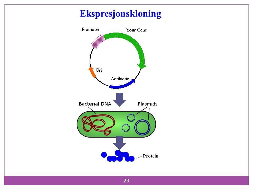 Ekspresjonskloning Protein