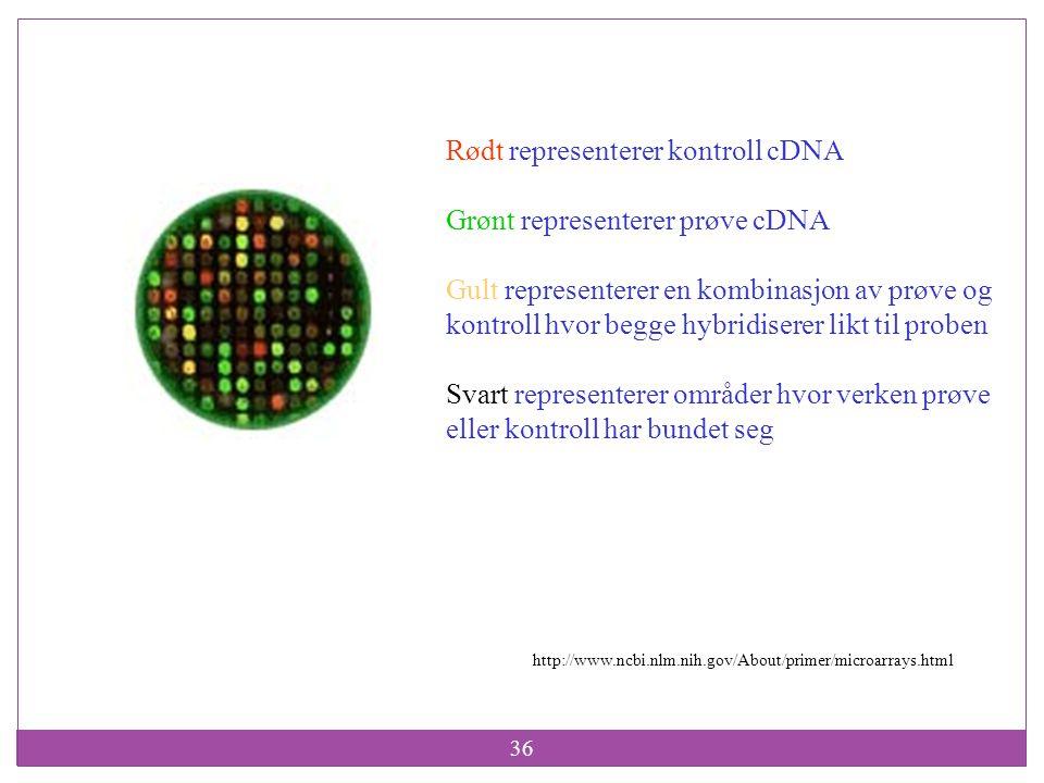 Rødt representerer kontroll cDNA Grønt representerer prøve cDNA
