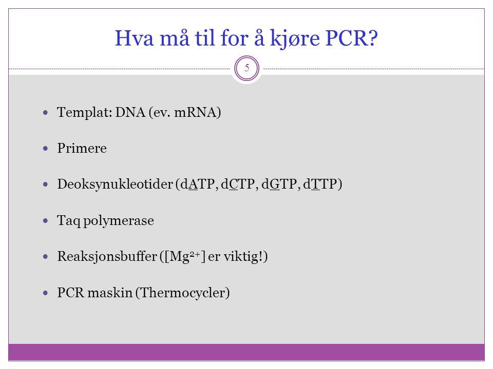 Hva må til for å kjøre PCR