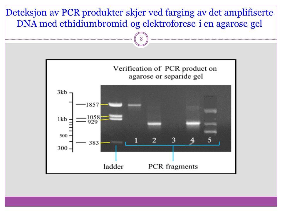 Deteksjon av PCR produkter skjer ved farging av det amplifiserte DNA med ethidiumbromid og elektroforese i en agarose gel