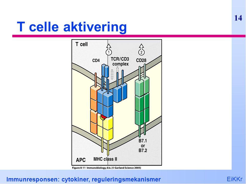 T celle aktivering