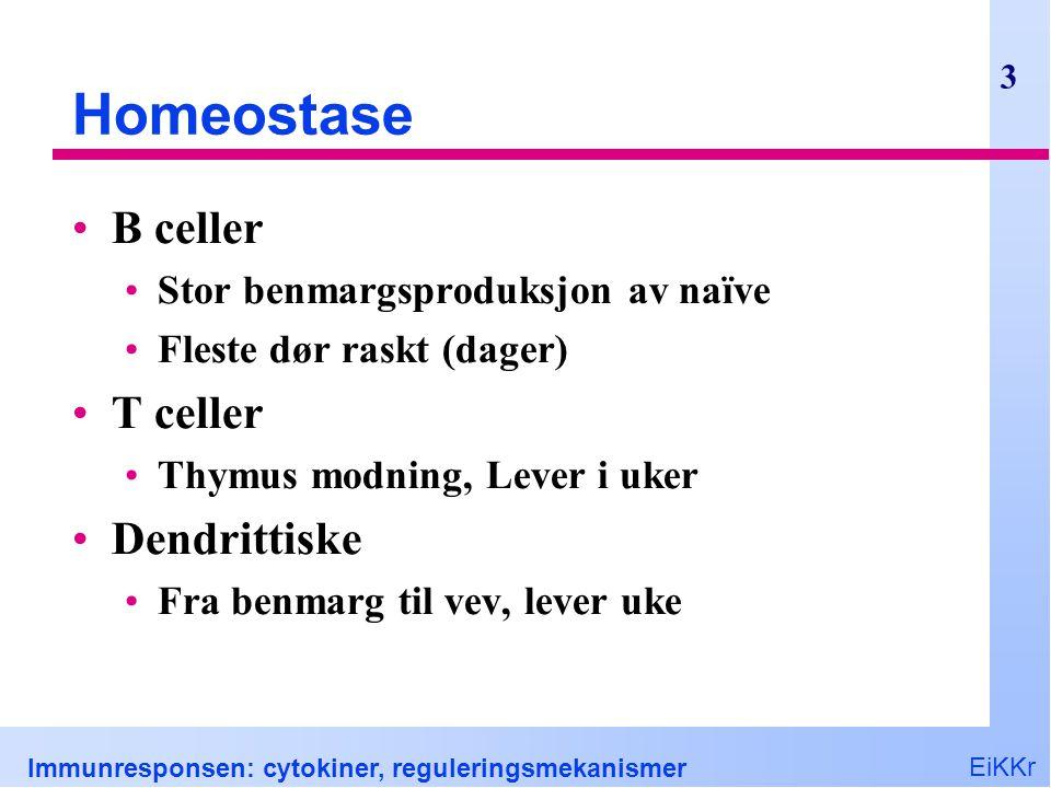 Homeostase B celler T celler Dendrittiske
