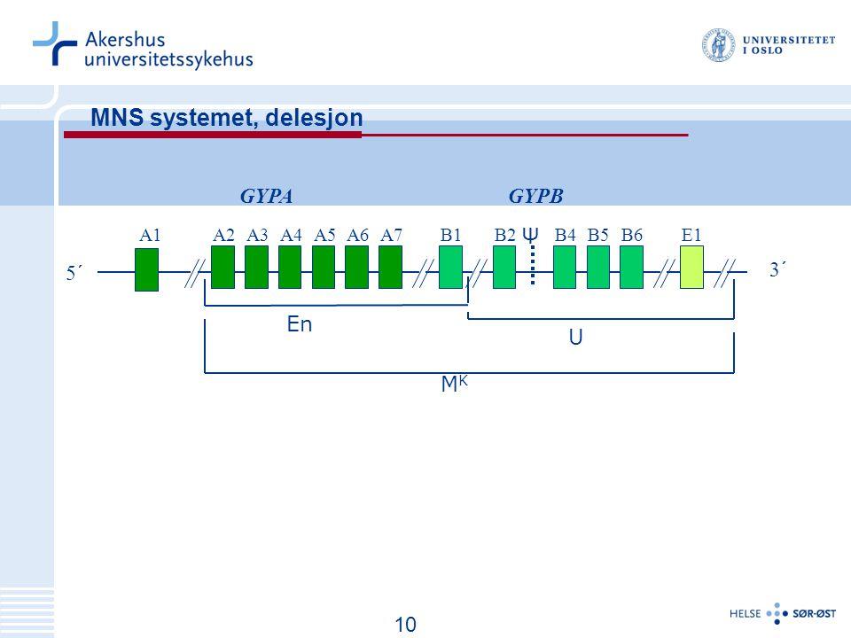 MNS systemet, delesjon GYPA GYPB Ψ 5´ 3´ En U MK 10 A1 A2 A3 A4 A5 A6