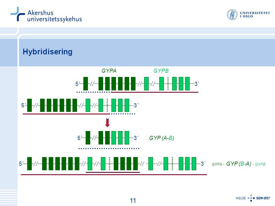 Hybridisering 11 GYPA GYPB 5´ 3´ 5´ 3´ 5´ 3´ GYP (A-B) 5´ 3´
