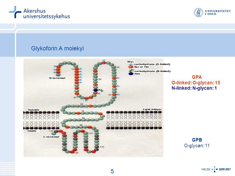 Glykoforin A molekyl 5 GPA O-linked: O-glycan: 15
