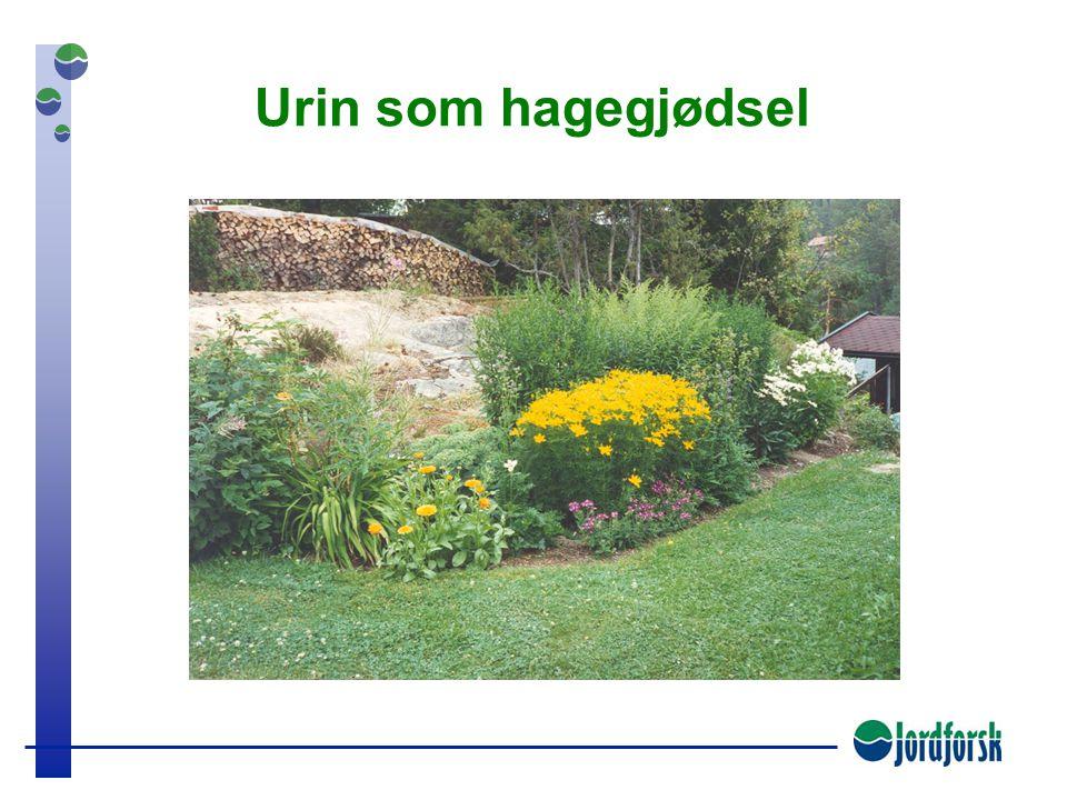 Urin som hagegjødsel