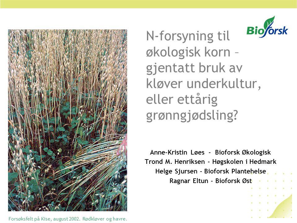 N-forsyning til økologisk korn – gjentatt bruk av kløver underkultur, eller ettårig grønngjødsling