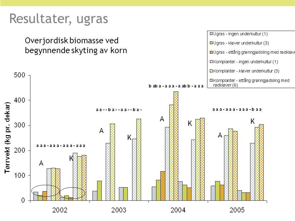 Resultater, ugras Overjordisk biomasse ved begynnende skyting av korn