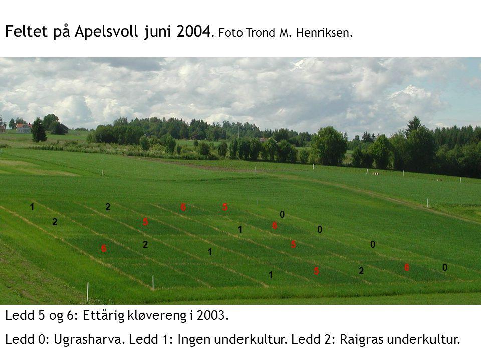 Feltet på Apelsvoll juni 2004. Foto Trond M. Henriksen.
