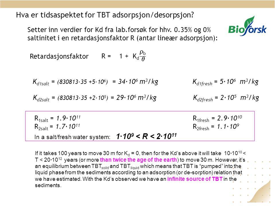 Hva er tidsaspektet for TBT adsorpsjon/desorpsjon