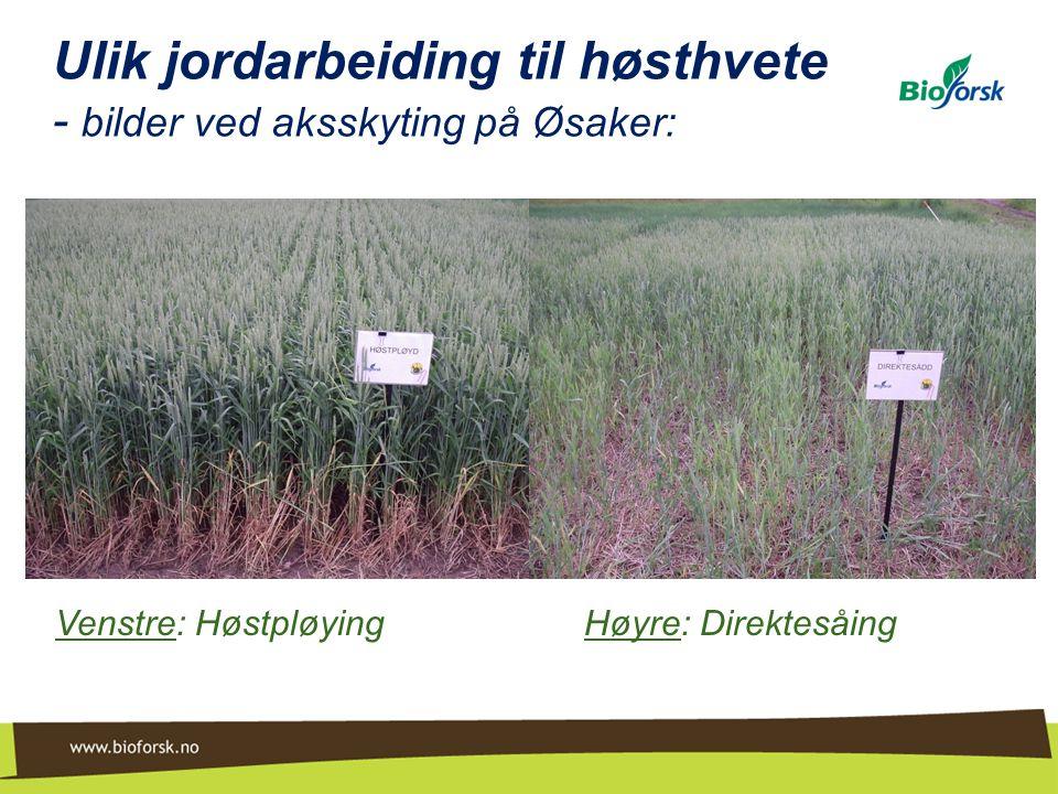 Ulik jordarbeiding til høsthvete - bilder ved aksskyting på Øsaker: