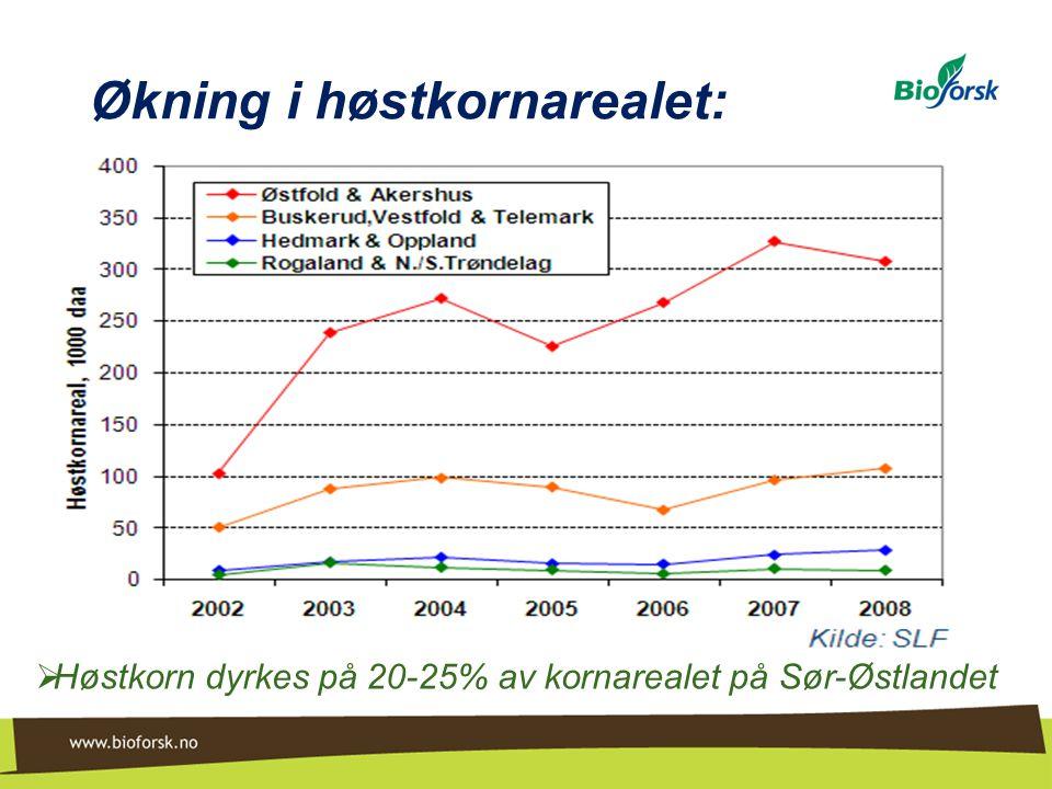 Økning i høstkornarealet: