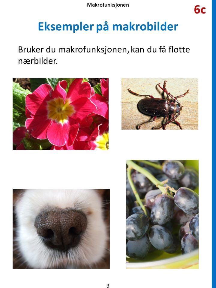Eksempler på makrobilder