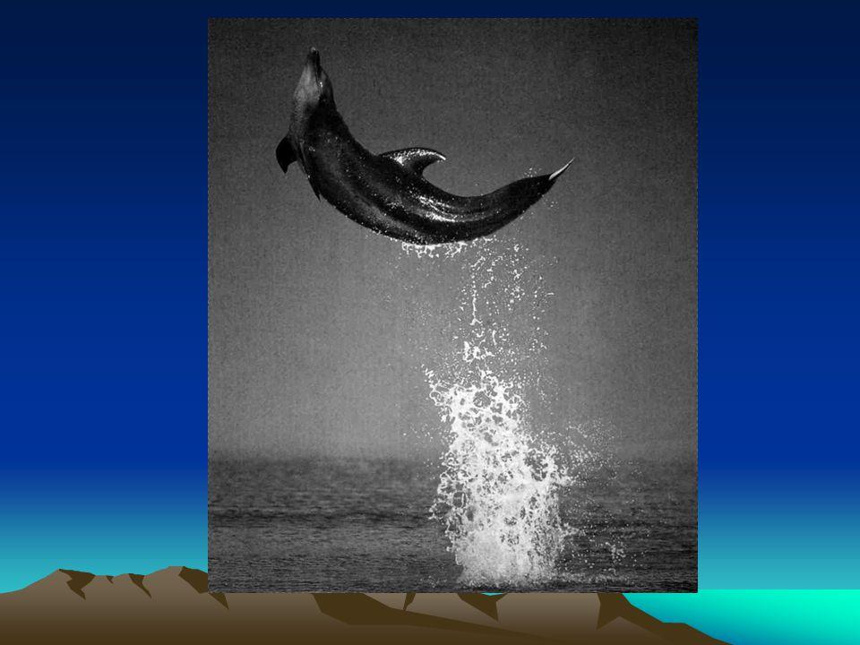 Slik som denne superfornøyde delfinen vil vi vel alle helst ha det her i livet.