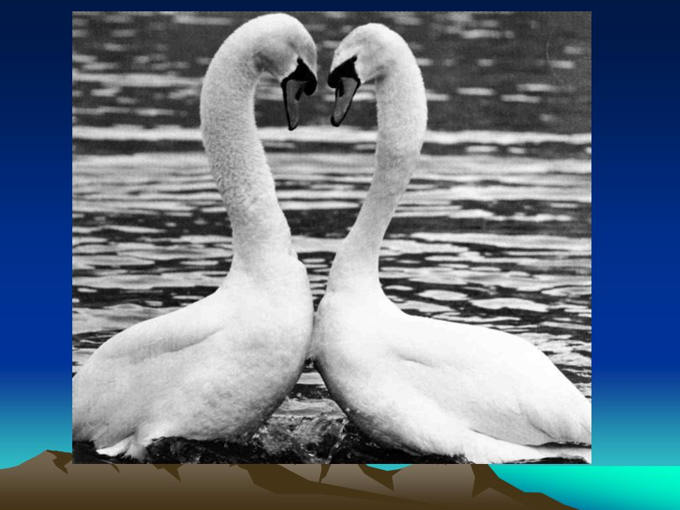Selv om vi blir syk eller skadet ønsker vi å få oppleve kjærlighet og fellesskap fra våre medmennesker.