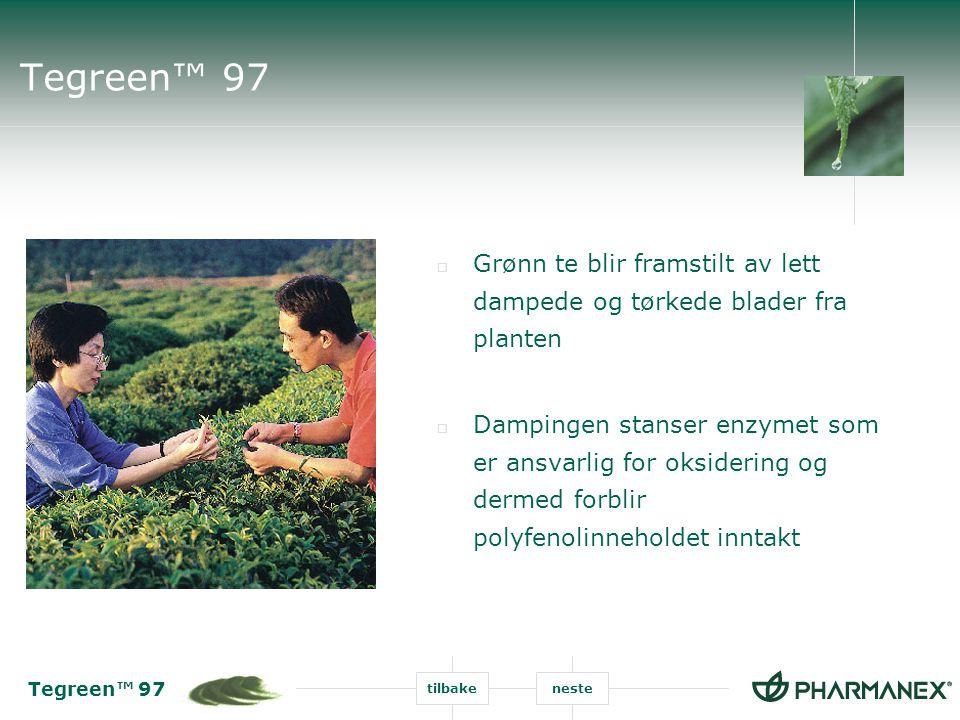 Tegreen™ 97 Grønn te blir framstilt av lett dampede og tørkede blader fra planten.