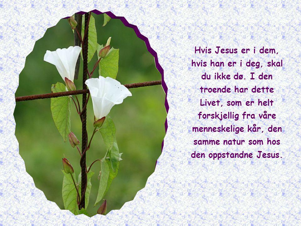 Hvis Jesus er i dem, hvis han er i deg, skal du ikke dø