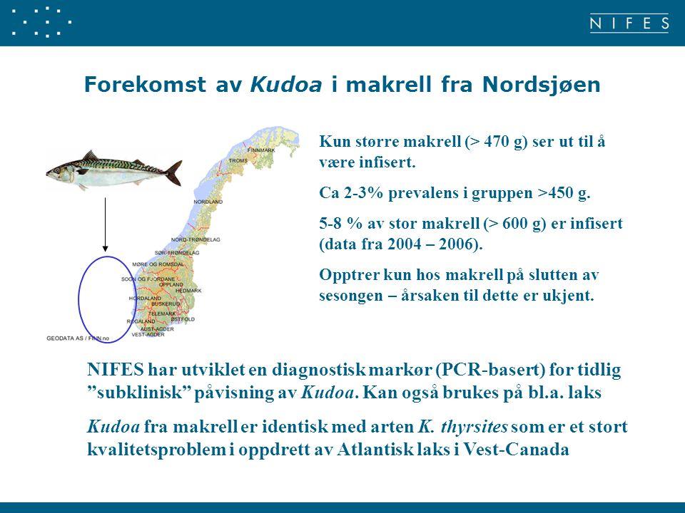 Forekomst av Kudoa i makrell fra Nordsjøen