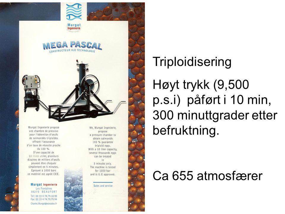 Triploidisering Høyt trykk (9,500 p.s.i) påført i 10 min, 300 minuttgrader etter befruktning.